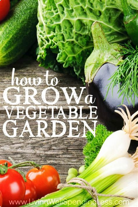How To Grow A Vertical Vegetable Garden How To Grow A Vegetable Garden Gardening Tips For Brown