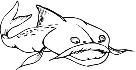 catfish coloring page catfish drawings clipart best