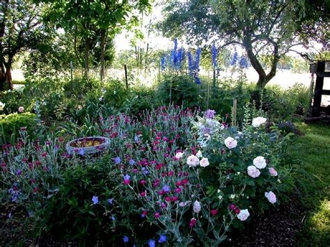 rose bed roses mixed beds vs rose beds monoculture vs