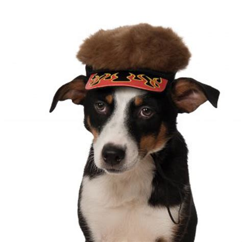 black spikey fur dog flame visor dog hat with spikey hair with same day
