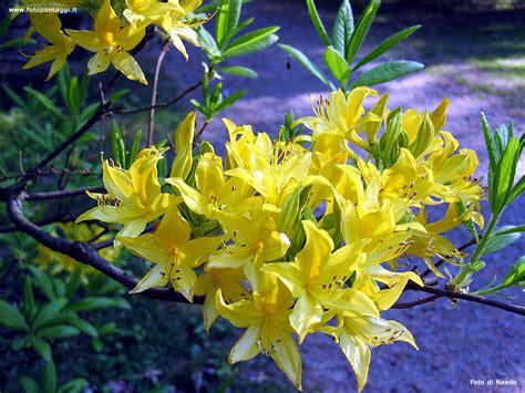 sfondi per desktop fiori sfondi per desktop i fiori sfondo 035