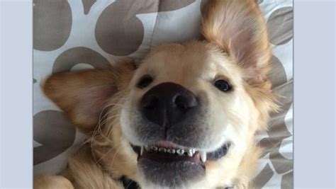 puppy braces braces on the most adorable puppy named wesley news
