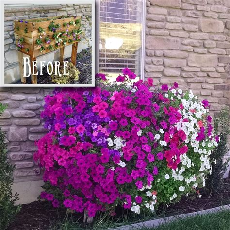 Planter Box Flowers by Hometalk Pallet Planter Box For Cascading Flowers
