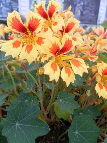 foglie e fiori genova galleria d 180 arte e fiori genova vendita piante fiori