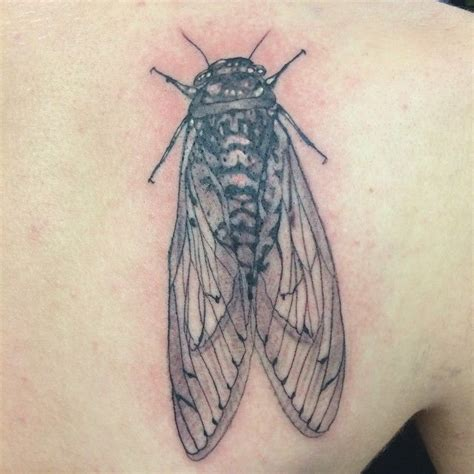 cicada tattoo cicada chest