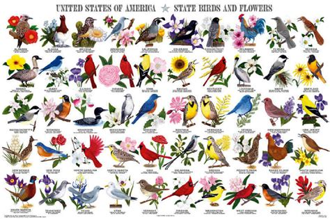 state flower list state birds and flowers poster