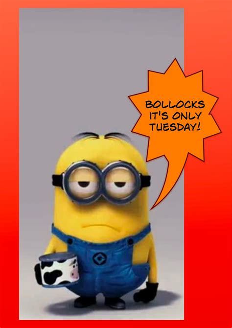 tuesday november 5 2013 stuff black people dont like funny tuesday quotes just b cause