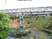 dobbies garden centre milngavie