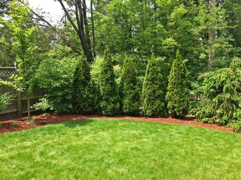 Tree In Backyard by Triyae Backyard Trees Landscaping Various Design