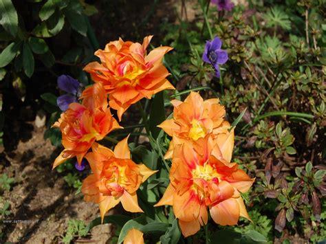 sfondi fiori gratis foto fiori singoli per sfondi settemuse it