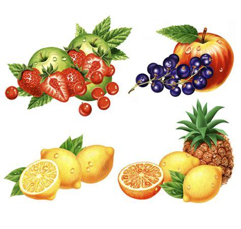 fruit drawings fruit illustrations illustrations of fruit for packaging