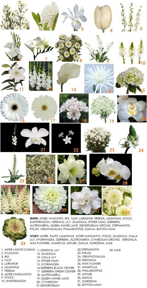 types of white flowers for wedding 301 moved permanently
