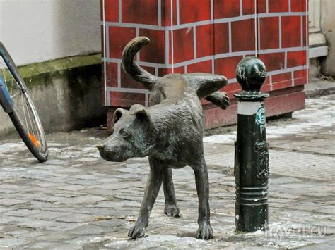 pissing dog  brussels native city  pissing boy