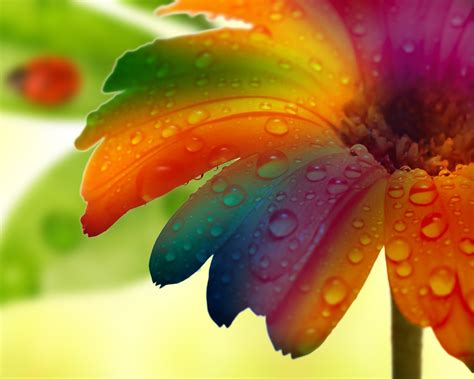 colorful water wallpaper hd flower water drop macro colorful hd wallpaper nature and