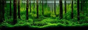 legendary aquarist takashi amano aquarium architecture