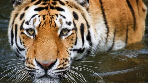 imagenes hd animales wallpapers 75 free hd animals backgrounds