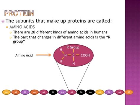 protein nucleic acid proteins and nucleic acids