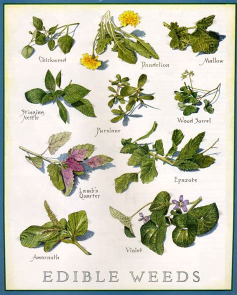25 best ideas about medicinal plants on pinterest insect repellent plants growing vegetables