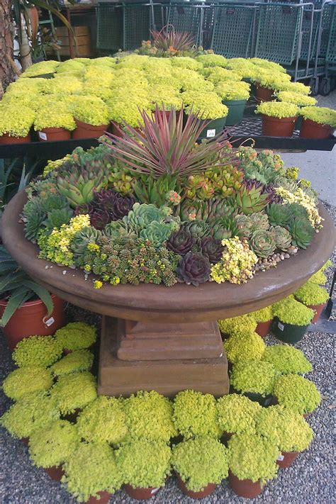 succulent container garden care garden design ideas