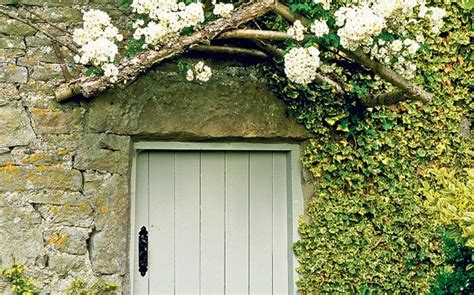 climbing plants for house walls thorny problems what is a climbing plant to cover a