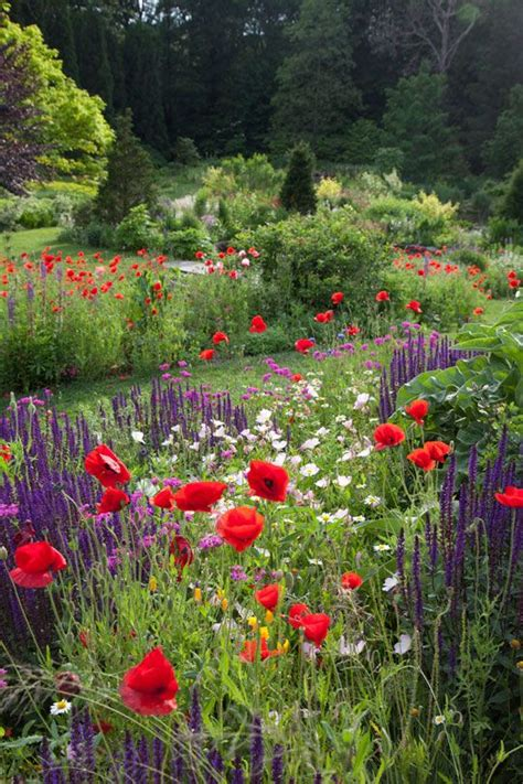 Poppy Flower Garden Pin By Chris On Garden
