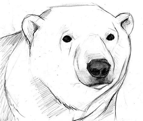 bear face sketch www imgkid com the image kid has it