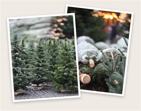 weihnachtsbaum selber schlagen heidelberg my blog