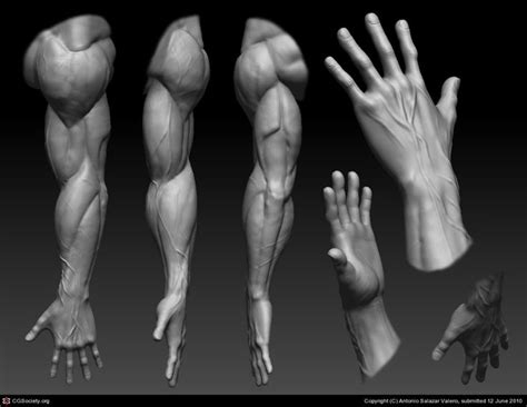 zbrush arm tutorial 67 best zbrush images on pinterest tutorials characters