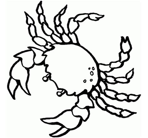65 sea creature templates printable crafts colouring