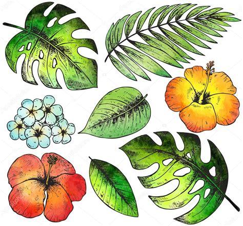 fiori disegnati e colorati set di fiori e piante tropicali colorati disegnati a mano