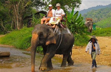 An elephant is one sweet ride