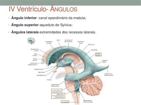 pavimento quarto ventricolo ventr 237 culos neuroanatomia