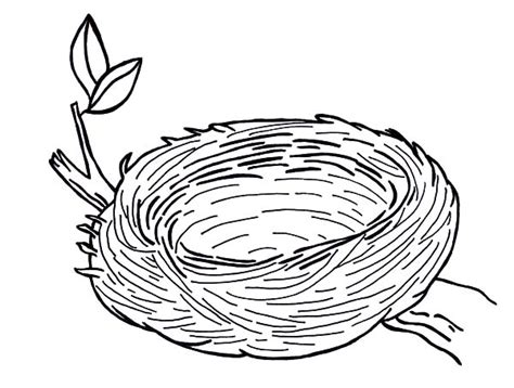 coloring page nest warm and safe bird nest coloring pages warm and safe bird