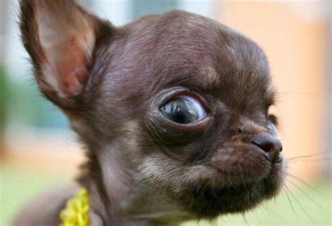 imagenes de animales gratis 12 cosas que los perros pueden predecir antes de que sucedan