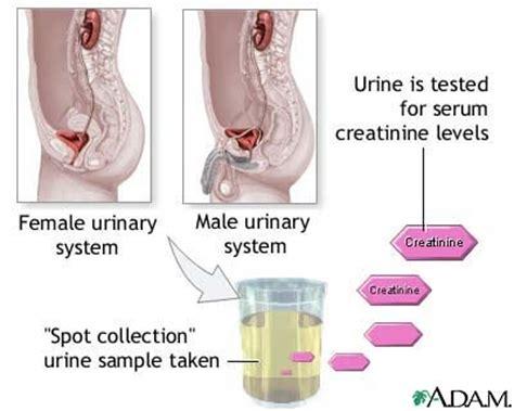 nursing considerations for routine urinalysis nursing crib