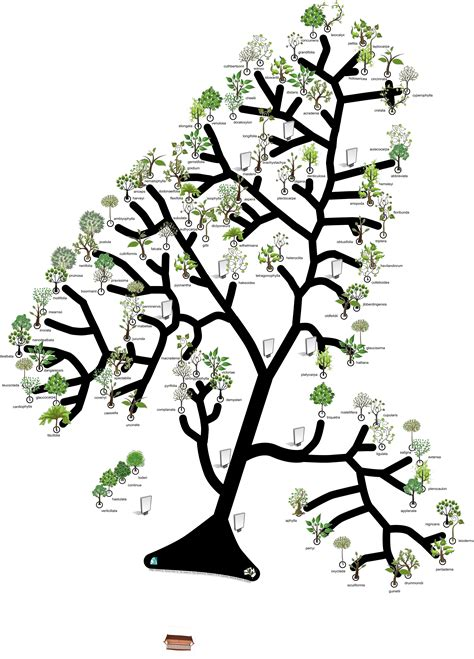 Tree Of tree of trees launch atlas of living australia