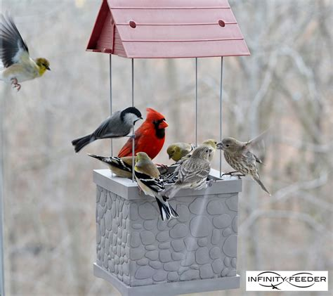 backyard bird feeding tips 100 backyard bird feeding tips how to make