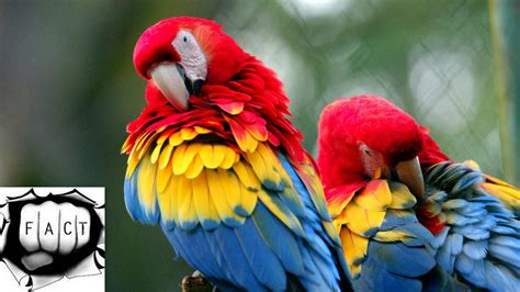 colorful animals top 10 most colorful animals in the world