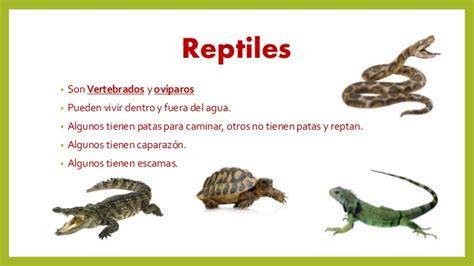 imagenes animales que reptan animales que reptan imagui