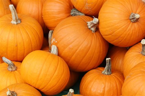 google images of pumpkins file bake these pumpkins in toronto jpg wikimedia commons