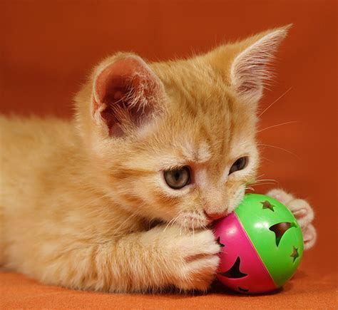 who plays cat how to deal with play aggression in attack kittens
