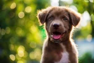 12 scientifically cute facts about puppies mental floss