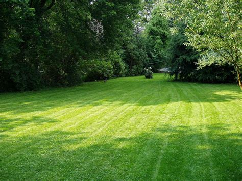 how much grass seed per square foot garden guides