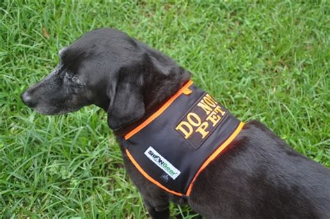 do not pet vest a do not pet shonvest is a high visibility alert safety vest for dogs