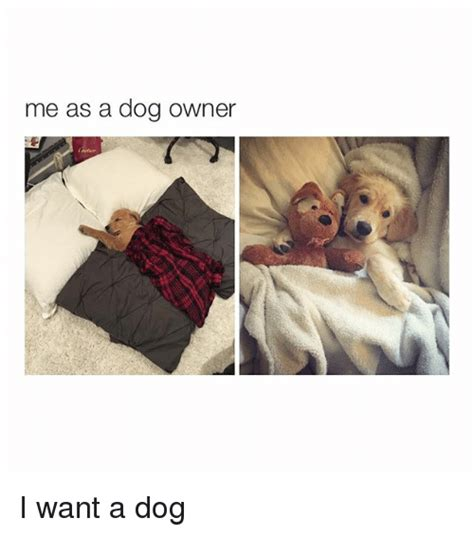 Dog Girlfriend Meme - funny girl memes of 2017 on sizzle holding