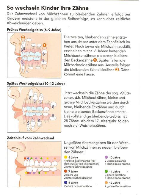 wann kommen welche milchzähne dr med dent dominik burkart allgemein zahnarzt sso