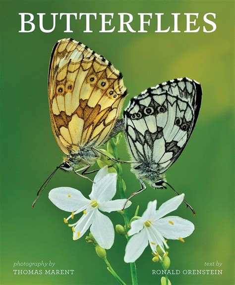 rocks butterflies books bug eric butterflies a great gift book but