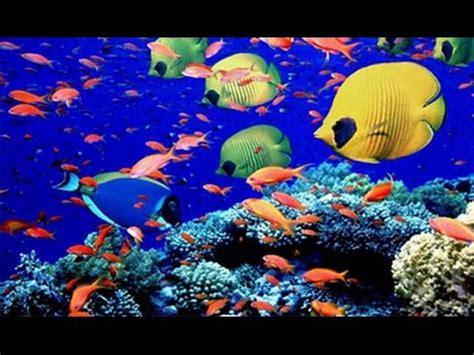 underwater animals beautiful fishes in indian ocean