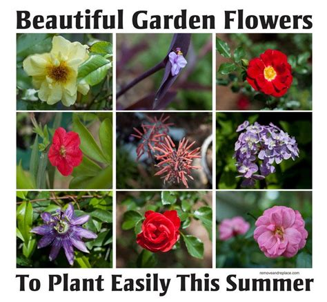 Variety Of Flowers For Garden 10 Types Of Beautiful Flowers To Plant In Your Garden For Summer Removeandreplace
