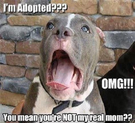 Adoption Meme - adoption meme funny pictures quotes memes jokes